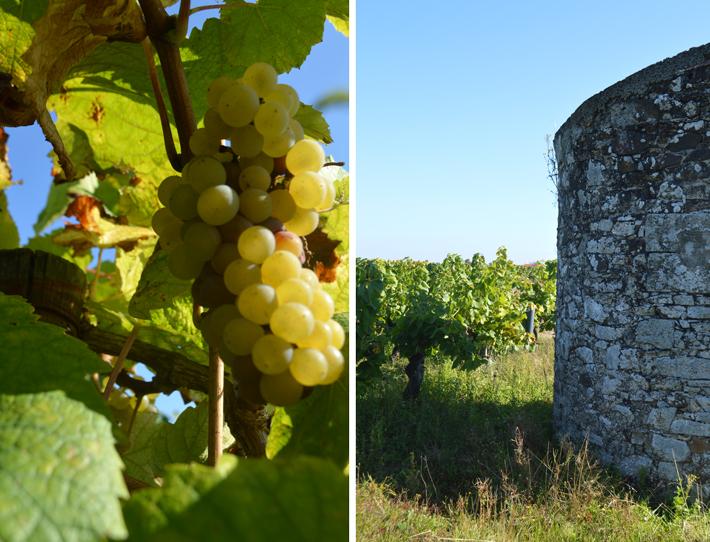 3-vignes-clos-montys-jeremie-huchet