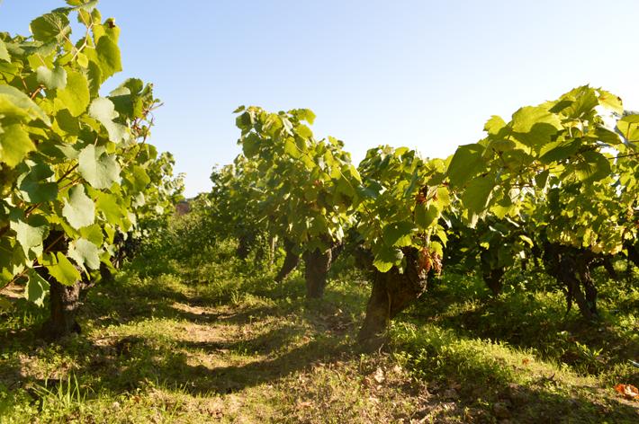 3-vignes-huchet