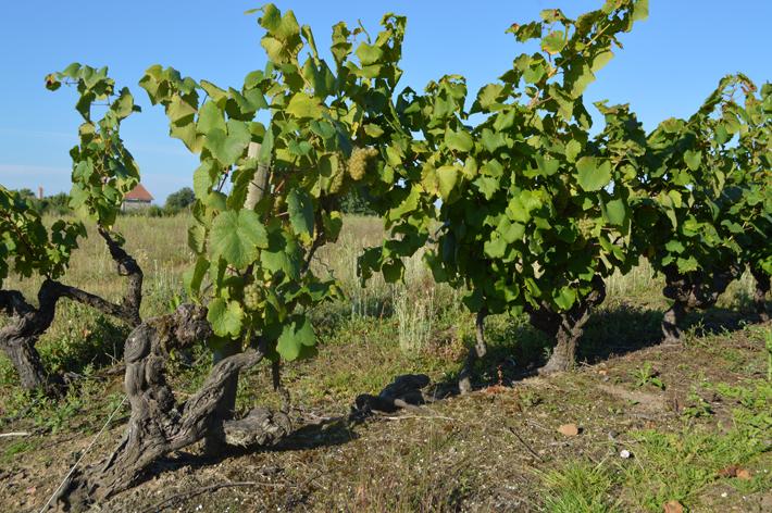 4-vignes-huchet