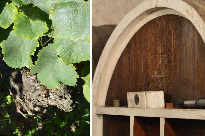 9-cave-vignes-jeremie-huchet